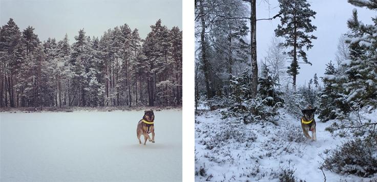 Båda hundarna - men på varsin bild