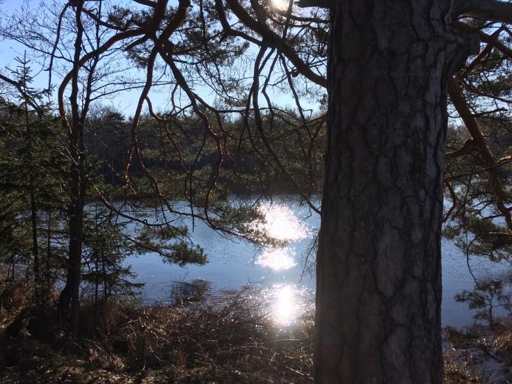 Utsikten åt ena hållet från fikabordet på udden