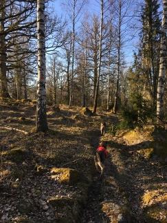 Leden går genom mysig lövskog, upp och ner för kullarna - det kallas inte för höglandet för intet!