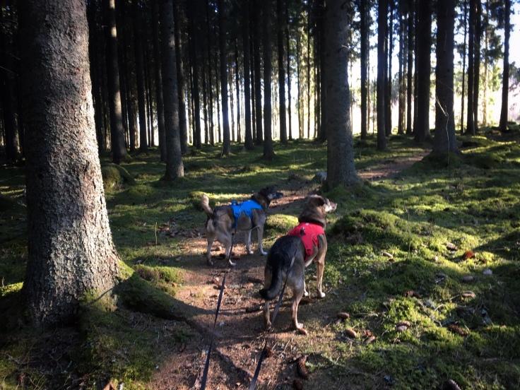 Delar av sträckan gick genom mossig skog, längs stigar och skogsvägar