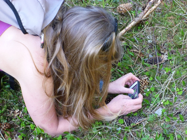 Jag försöker få en bra bild av harsyrans första skira blommor