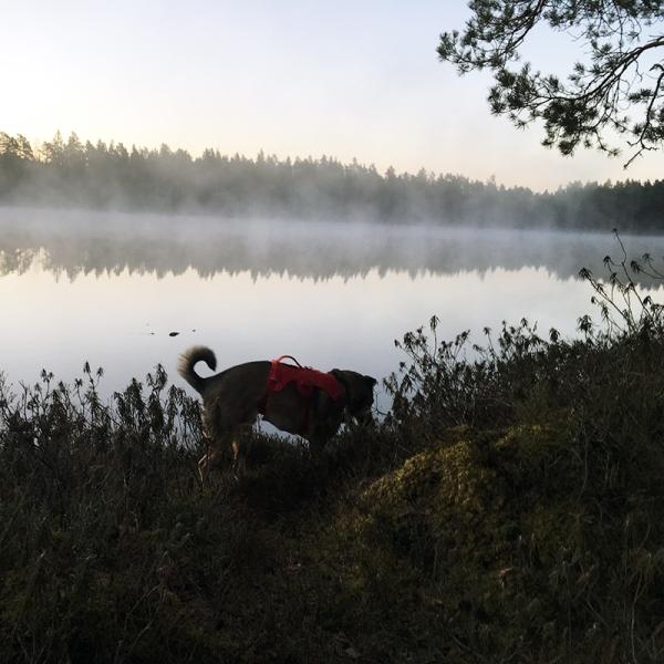 Morgondis över skogstjärn - och min ena hund