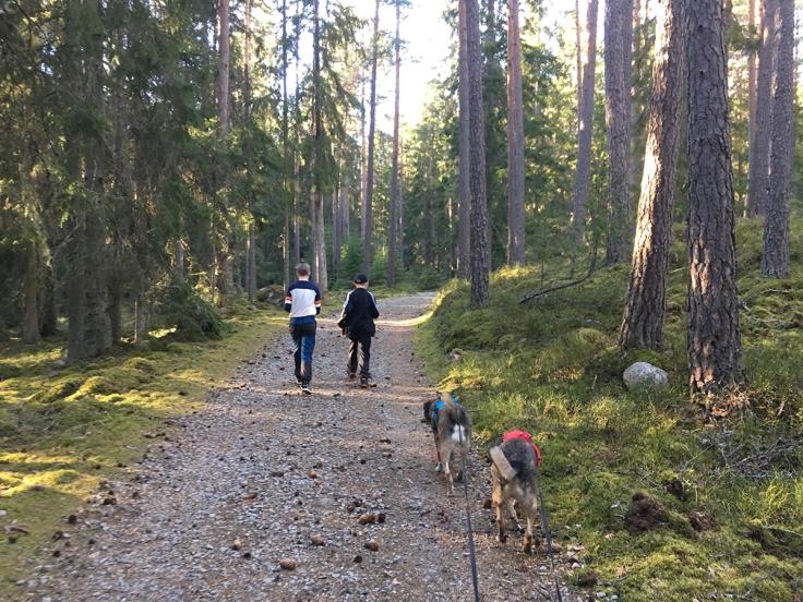 Från Klinten gör höglandsleden en avstickare mot Anebyleden, och denna del passerar Skuruhatt.