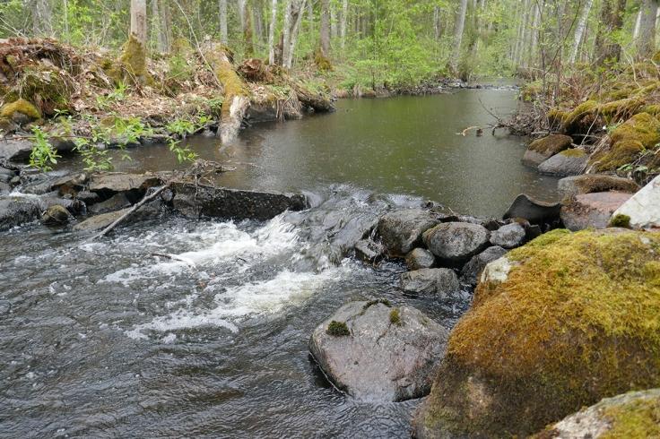 """Vackert även när det regnar - en del av Emån, längs """"Skog-vattenslingan"""" som utgår från Emåns ekomuseum i Bodafors."""