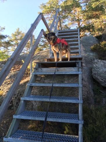 Här är trappan som leder ner till vindskyddet