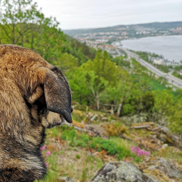 Utsikt mot Jönköping, E4:an och Vättern