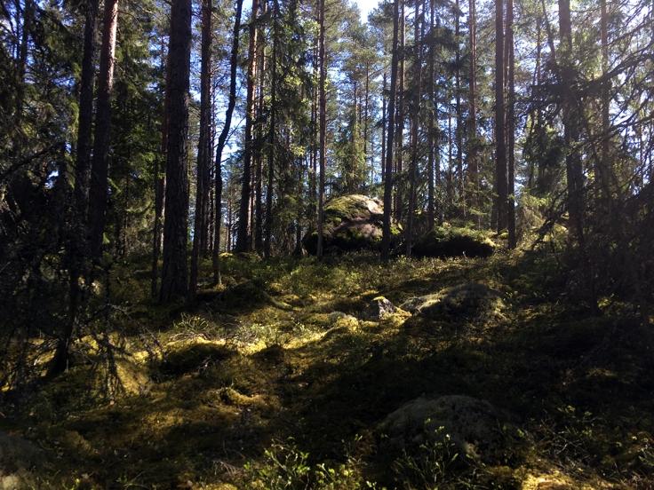 Mossa, stenblock och skog som känns uråldrig finns det gott om i den lilla nationalparken Norra Kvill.