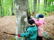 Lycka är att hitta ett IHÅLIGT träd - som dessutom är vattenfyllt