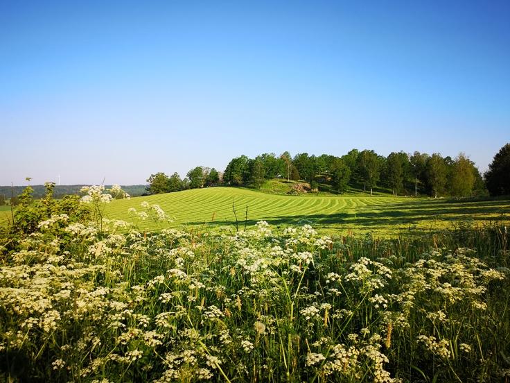 De små grusvägarna med grässträng i mitten går genom detta vackra odlingslandskap
