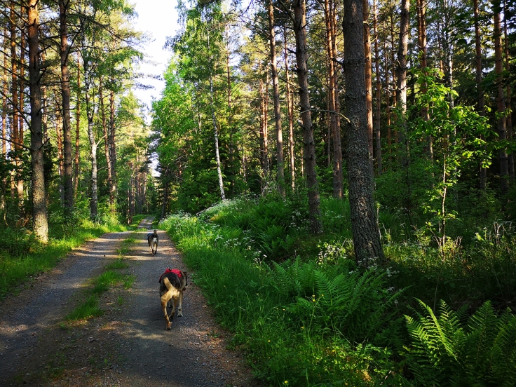 Mina hundar njöt av svalkan som skogen erbjöd