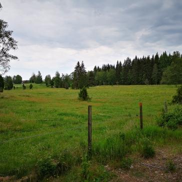 Ängsmark