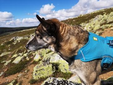 Geminis öron har ställt sig upp i vinden :)