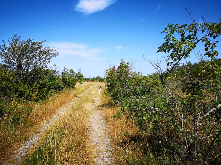 Idyllisk skogsväg