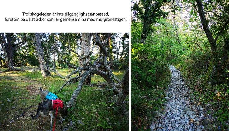 """På den del av slingan där det bara är trollskogestigen är det lite mer """"natur"""" att gå på"""
