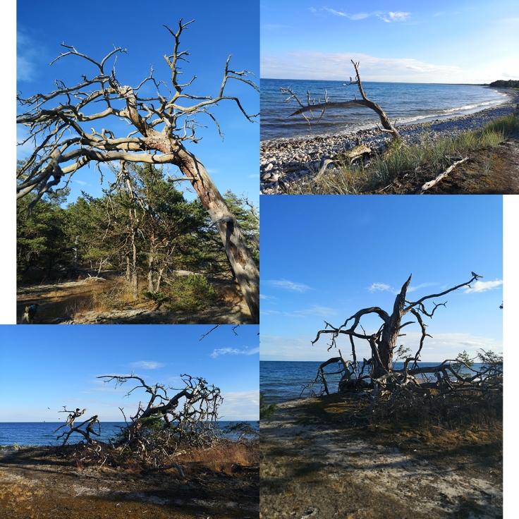 Alla döda träd som fanns längs leden var oerhört vackra och jag blev helt fascinerad av dem
