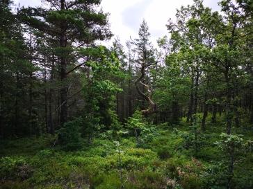 Det fanns många vackra träd längs leden