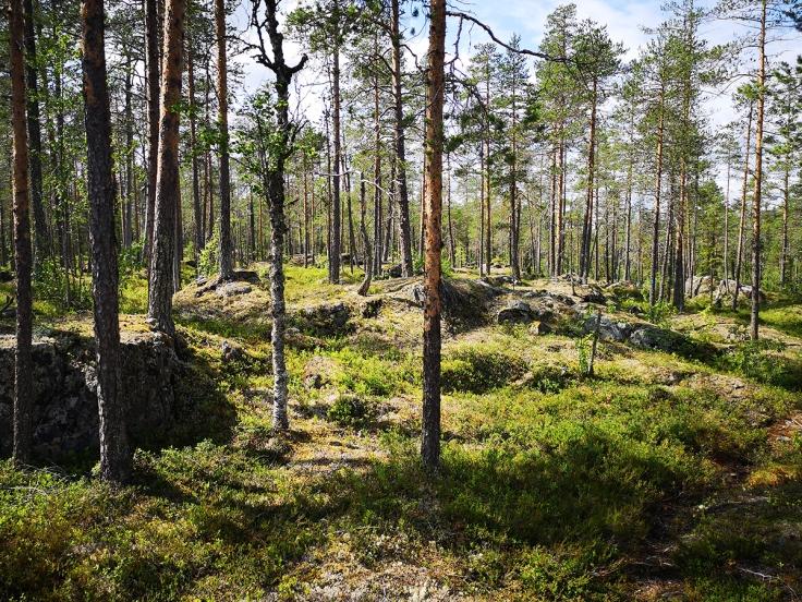 I sådan här underbar skog går stigen