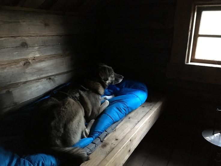 En av hundarna stal min sovsäck...