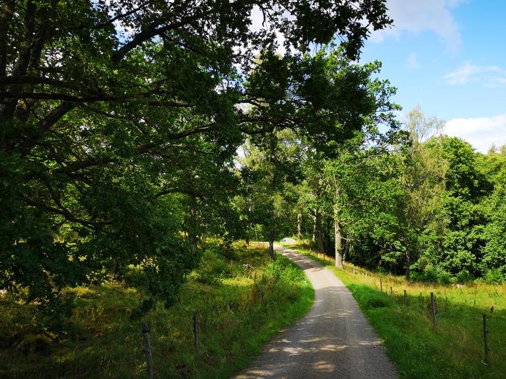 Smala grusvägar förbi lummiga hagar med lövträd