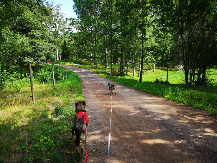 Hundarna på väg