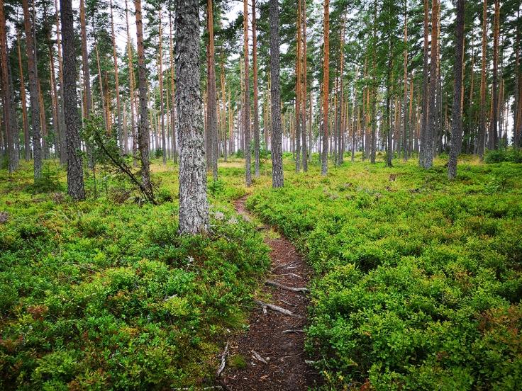 Att gå över tallmo är rätt avslappnande, både för fötter och själ.