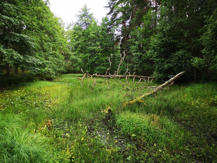 Dammen har betydligt mer vatten på våren