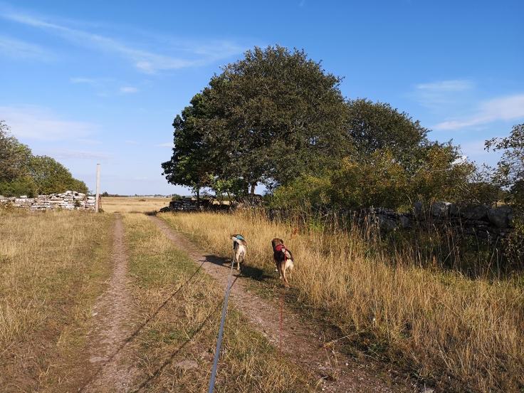 Mitt vandringssällskap - mina hundar
