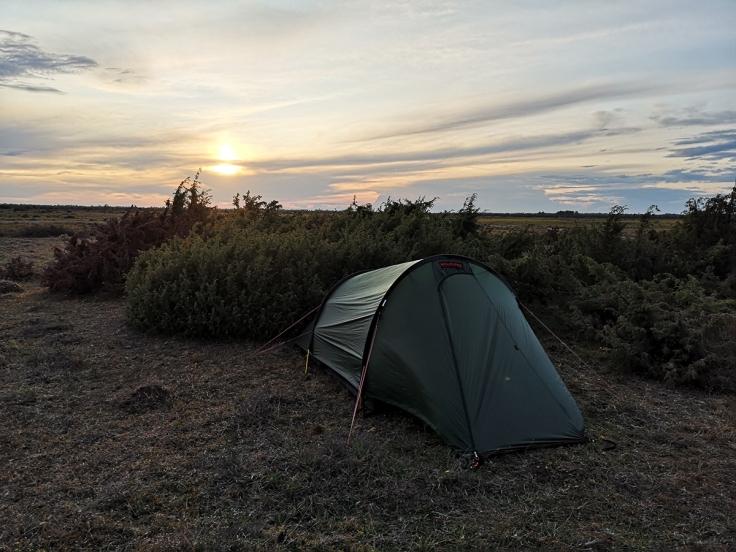 Tältet kom upp - trots kraftig blåst och två stirrande kor