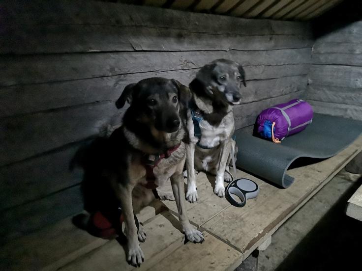 Hundarna var lite skeptiska till sina sovplatser
