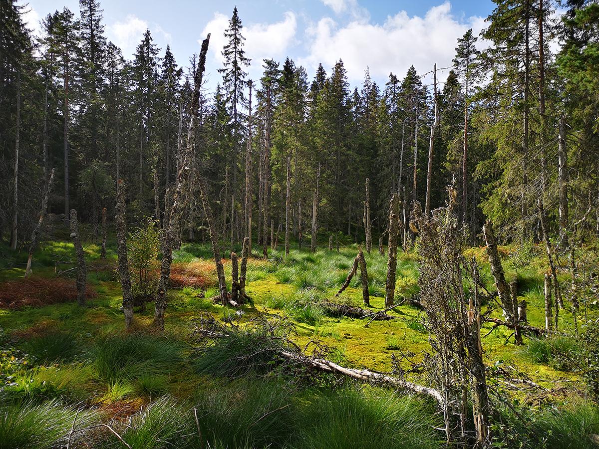 Den här vackra lilla våtmarken ingår också i naturreservatet