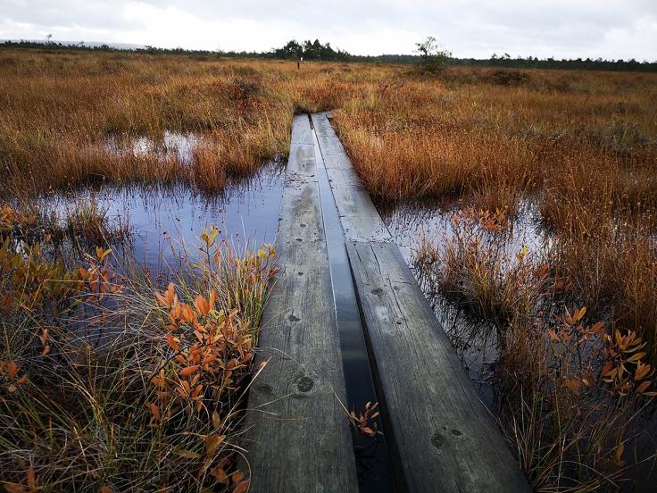 Rejält blött längs lederna  och på många ställen låg spången helt under vatten