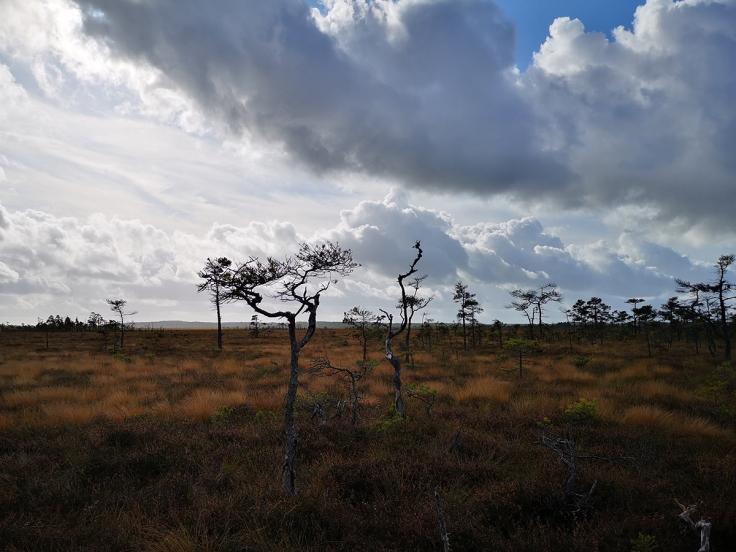 Dramatisk natur mot en dramatisk himmel